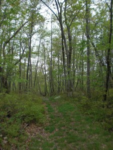 New Jersey Wooded Area